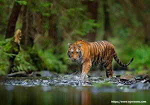 Kerala's Famous Wildlife Destination