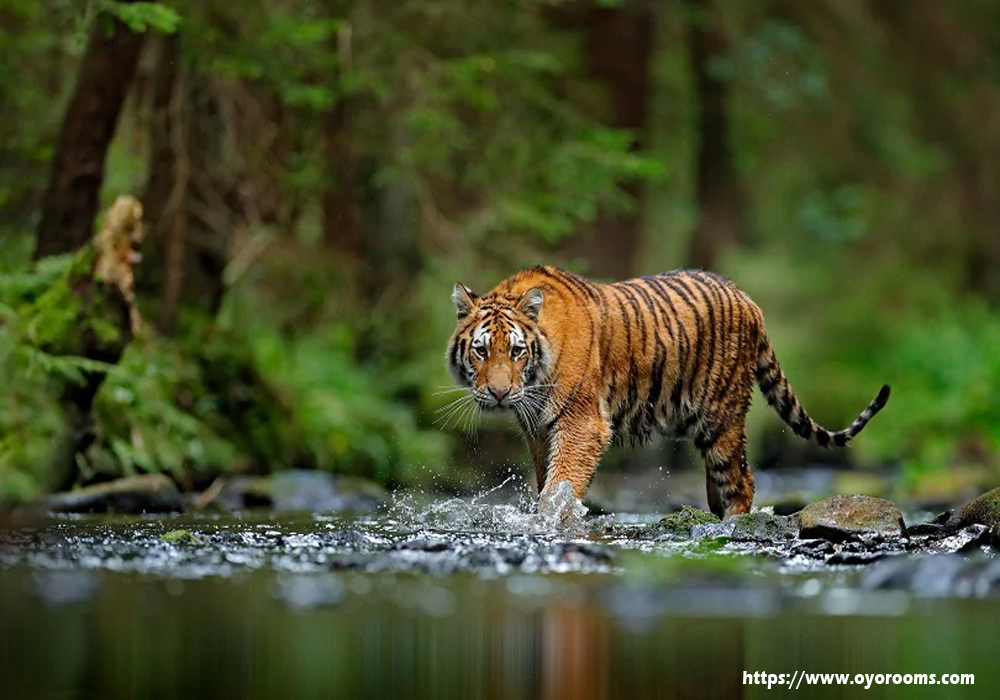 Kerala's Famous Wildlife Destination